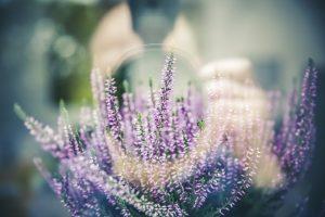 Flores ideales para la decoración de tu fiesta nupcial